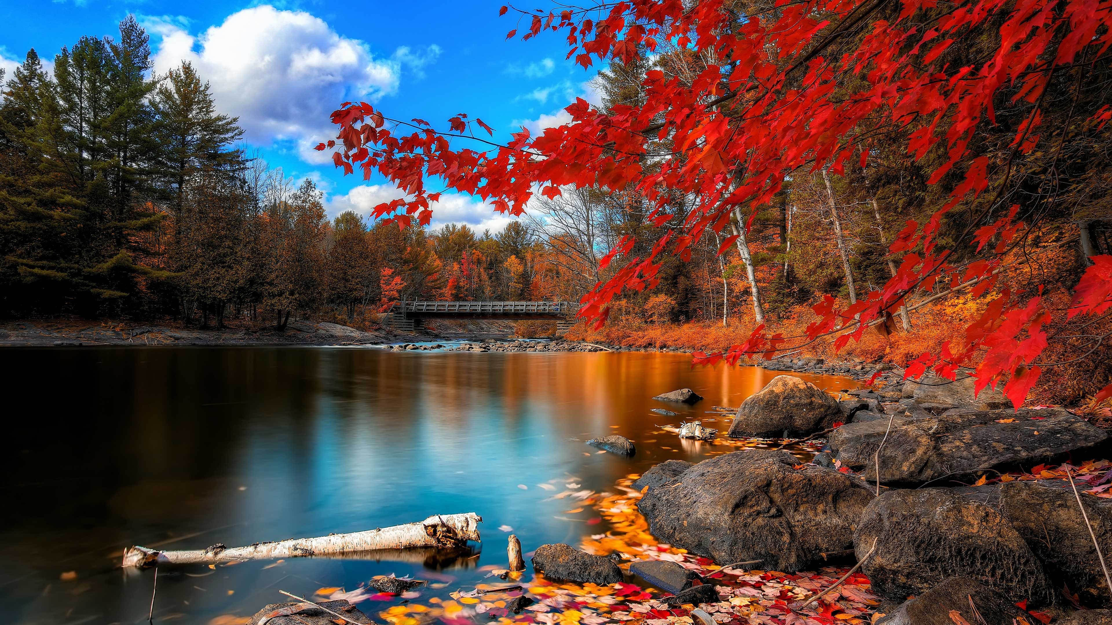 Autumn lake and trees
