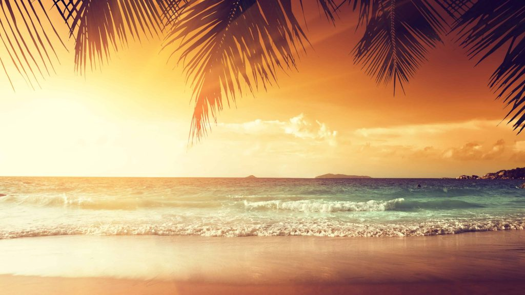 Tropical Beach With Palm Trees At Sunset Uhd 4k Wallpaper Download High Resolution 4k Wallpaper