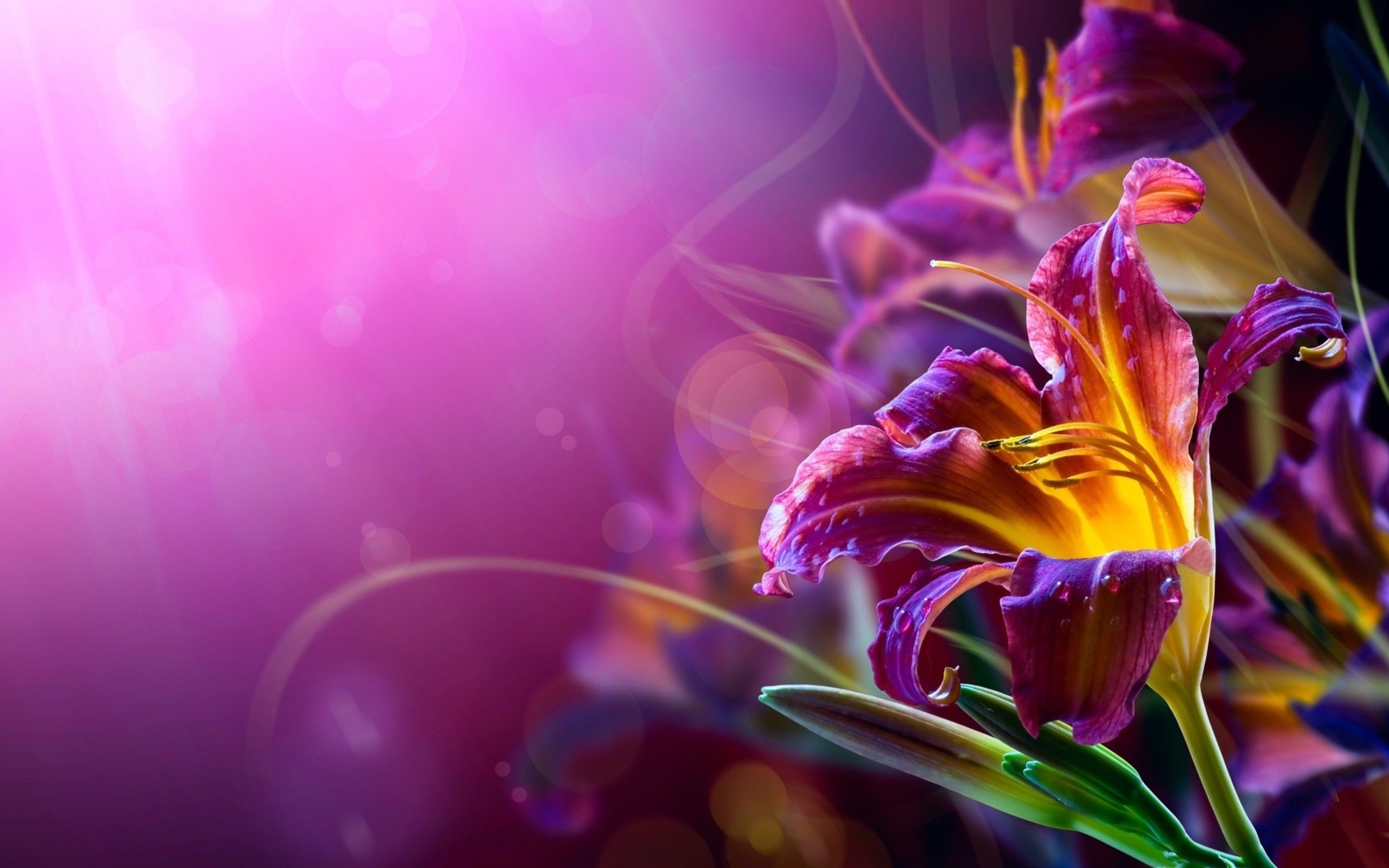 Abstract Floral 1080p Wallpapers