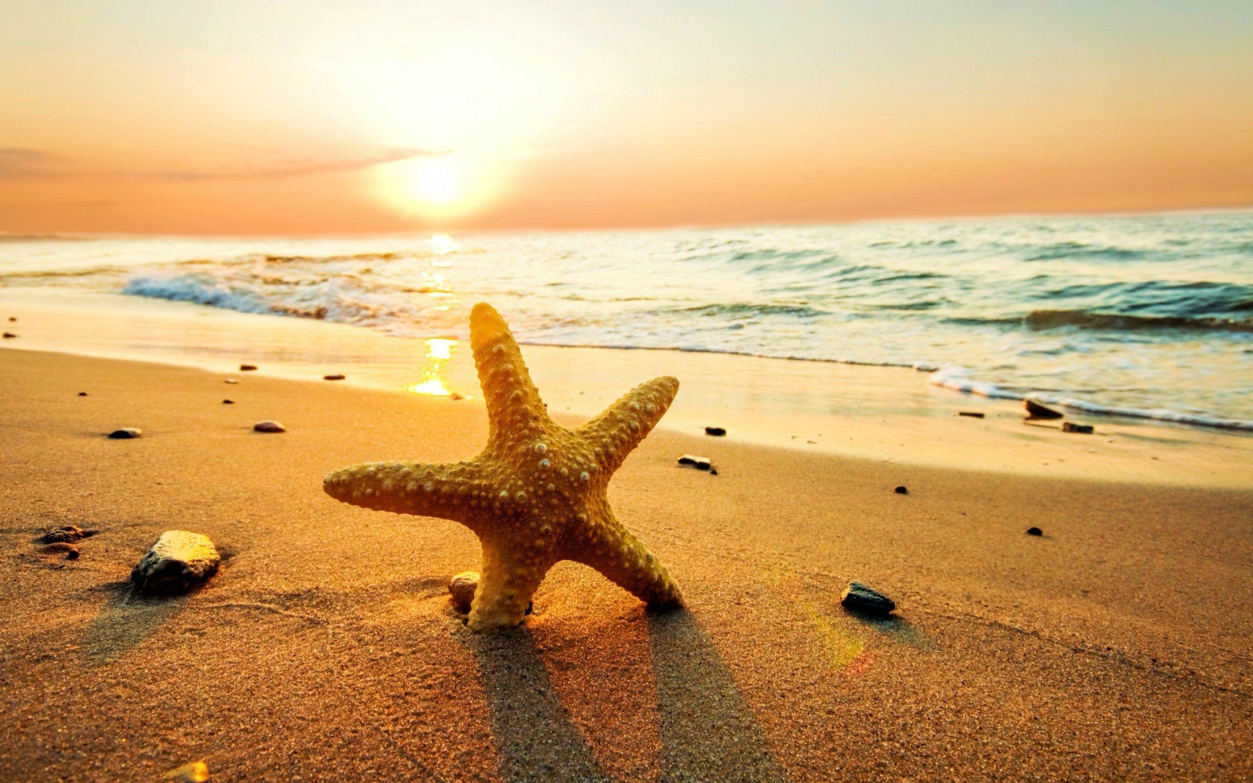 Beach Sunset iphone Wallpapers