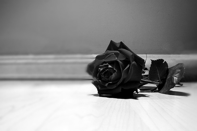 Black Rose iphone Wallpapers