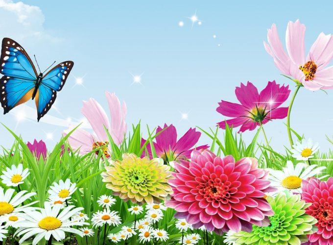 Hd Butterfly Garden 1080p Wallpapers Windows Desktop Background Wallpapes High Resolution 4k Wallpaper