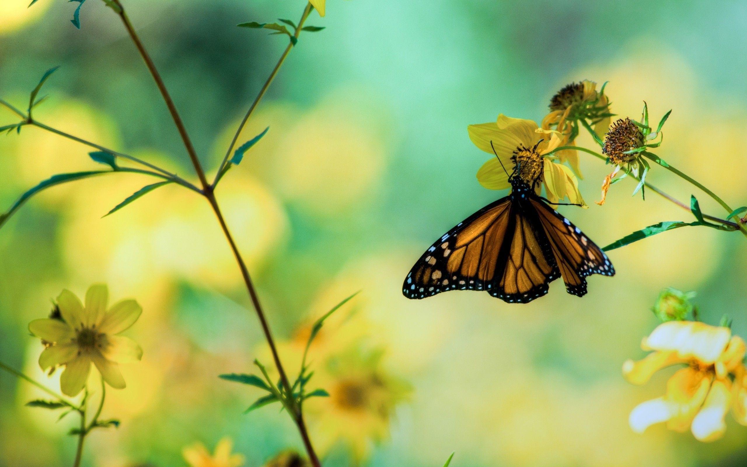 Butterfly Garden 4K Wallpapers