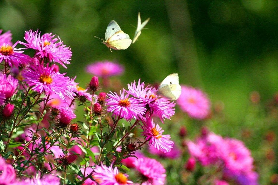 Butterfly Garden Gallery
