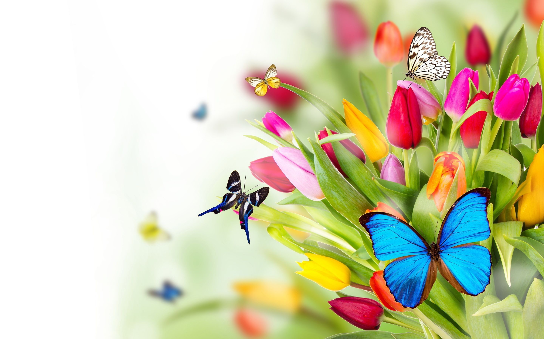 Butterfly Garden HD Wallpapers