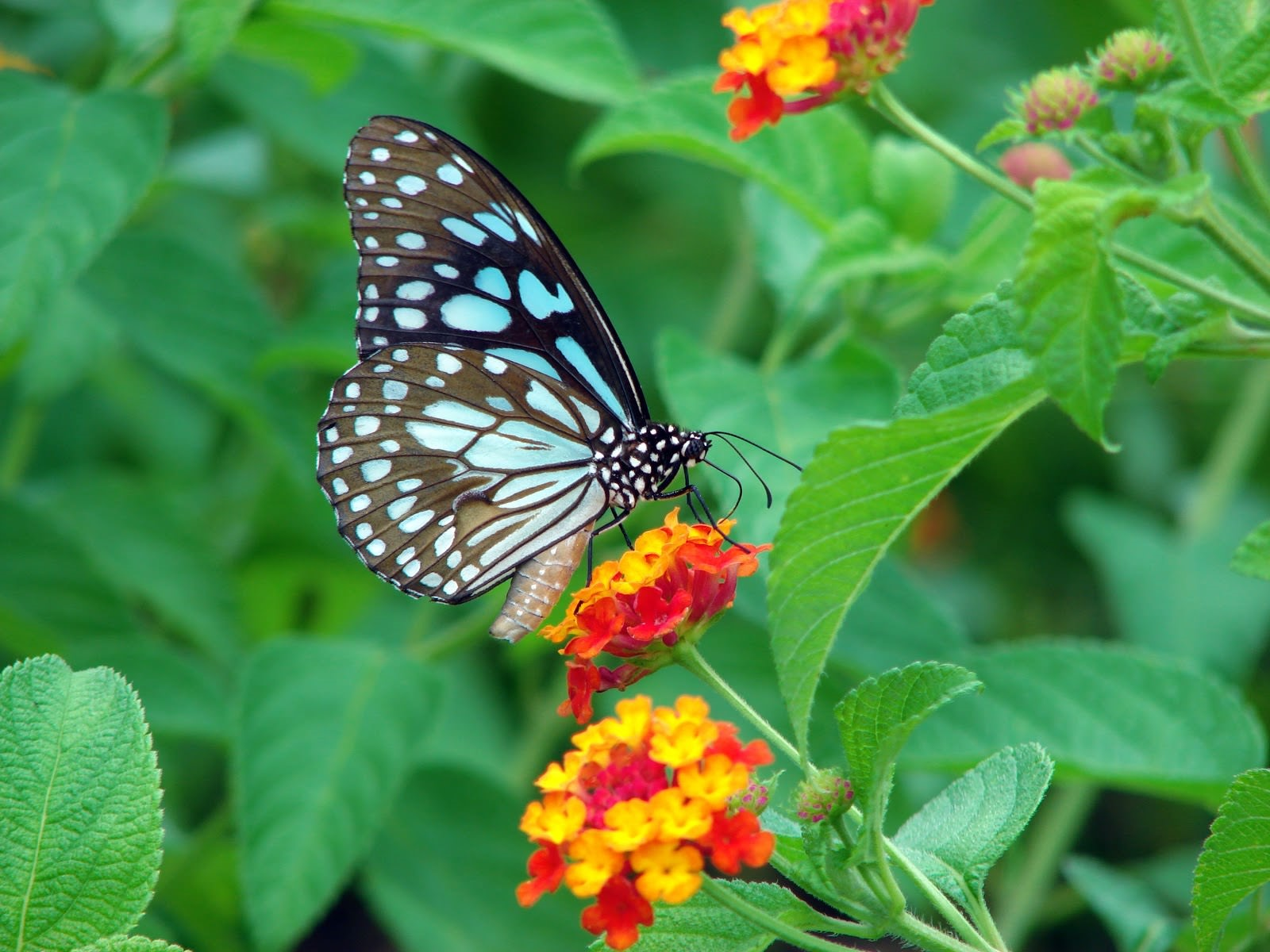 Butterfly Garden Photo