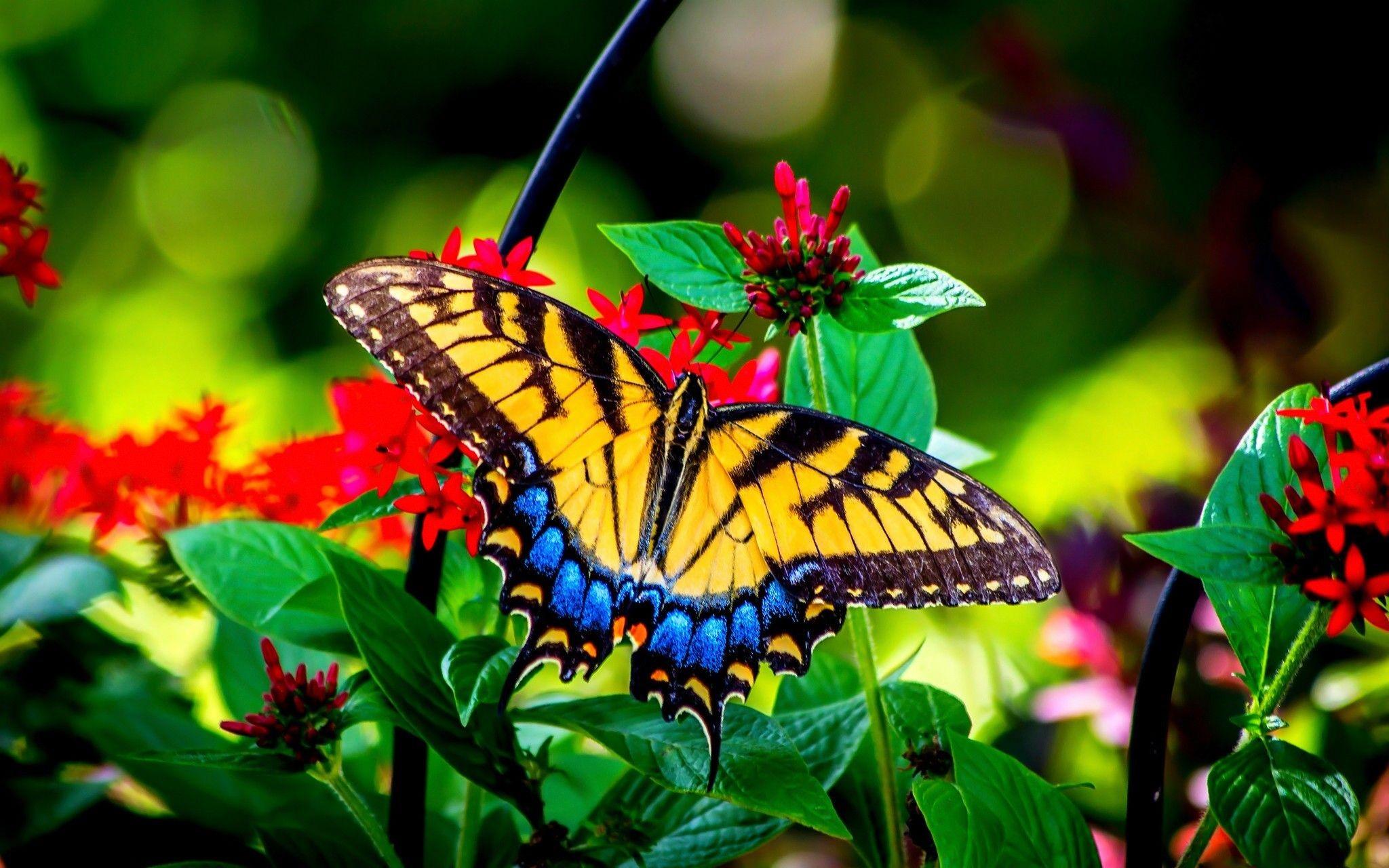 Butterfly Garden Pics
