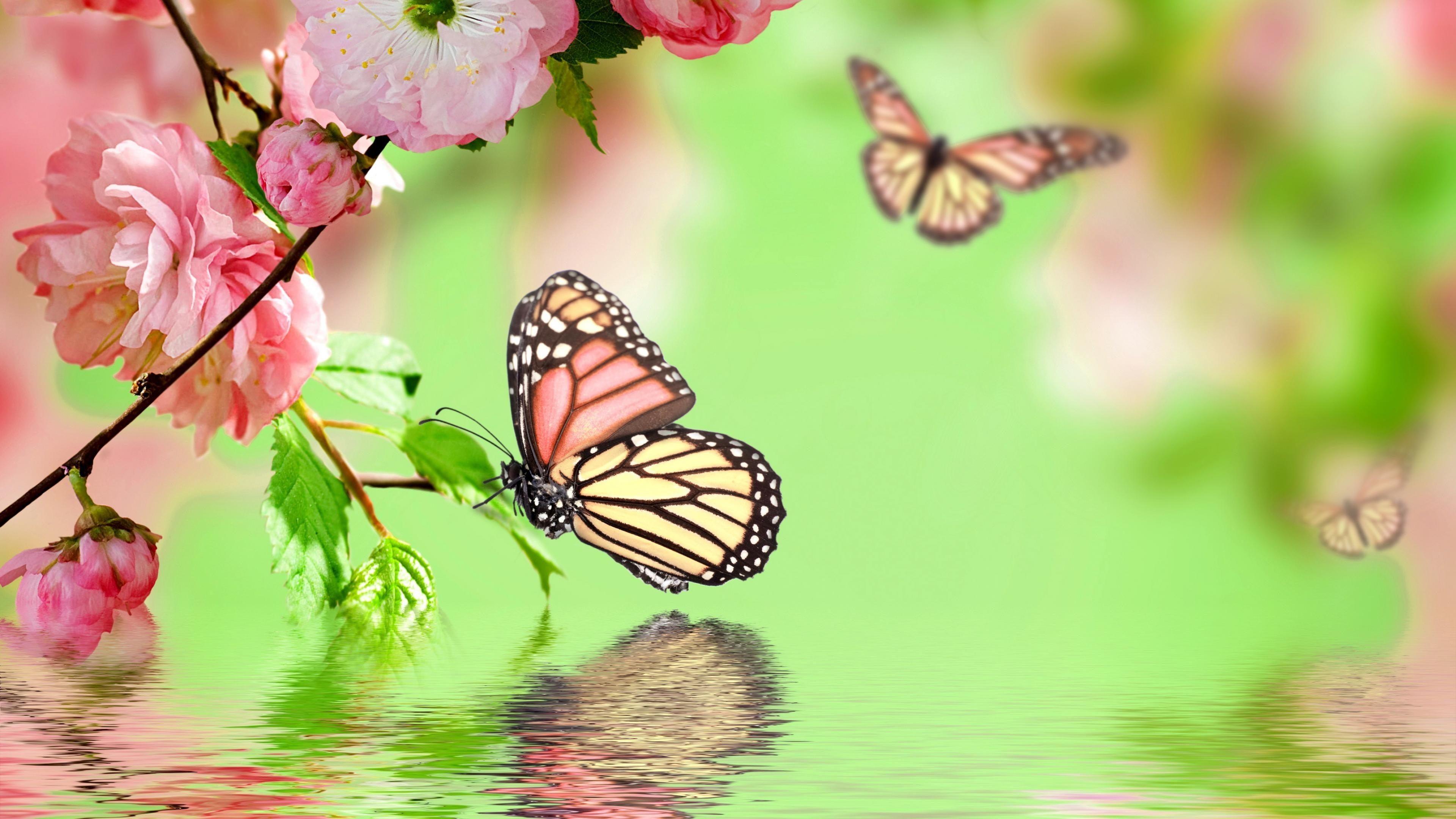 Butterfly Garden UHD Wallpapers
