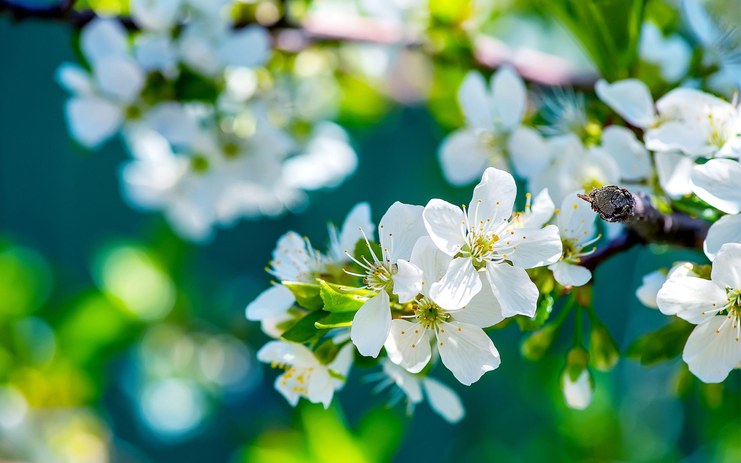 Flower Mobile HD Wallpaper