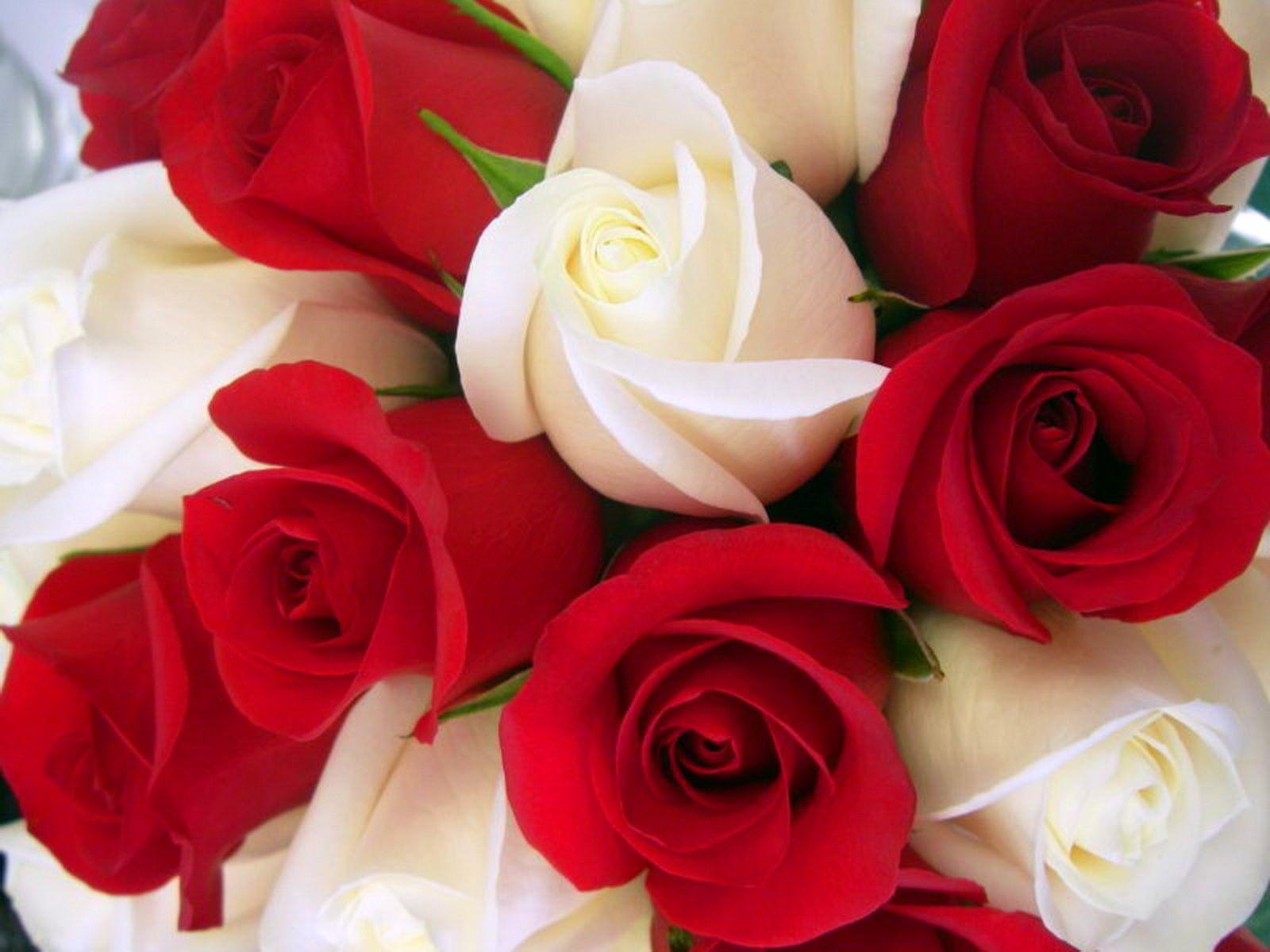 Rose 1080p Wallpapers