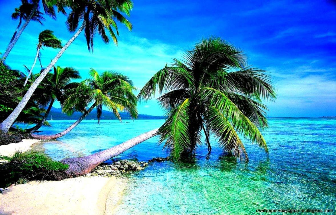 Tropical Beach Landscape 4K Wallpapers