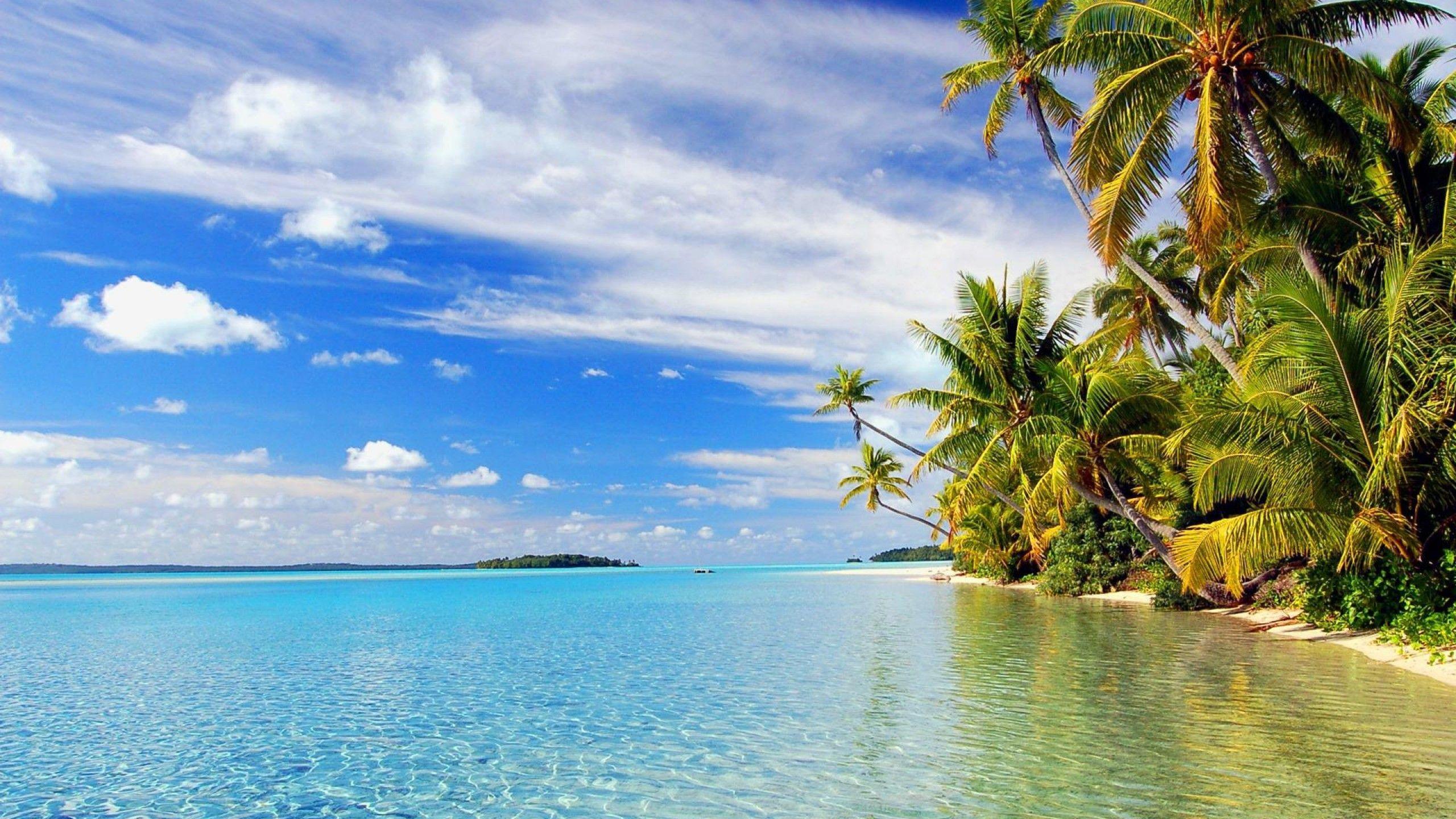 Tropical Beach Landscape Background