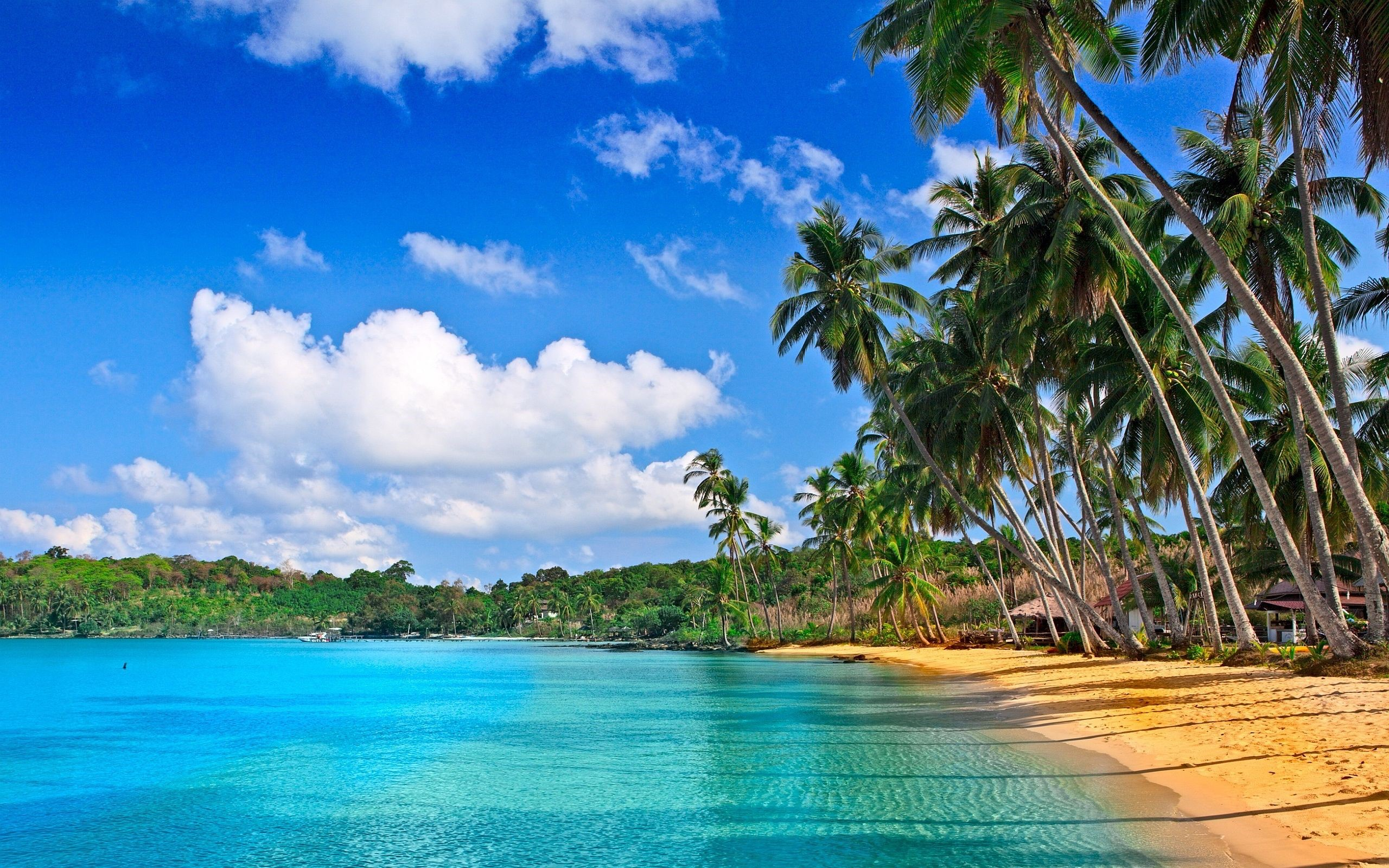 Tropical Beach Landscape Free Wallpaper