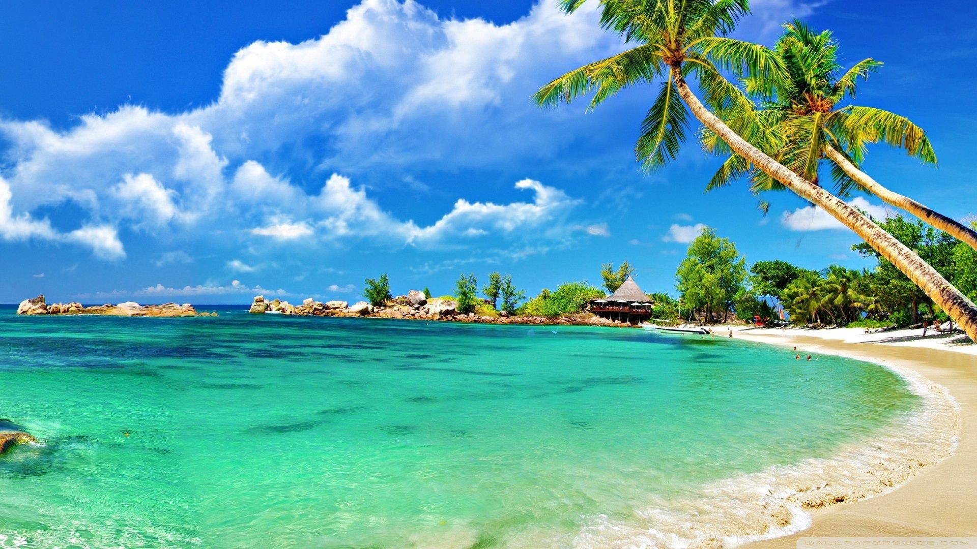 Tropical Beach Landscape Photo