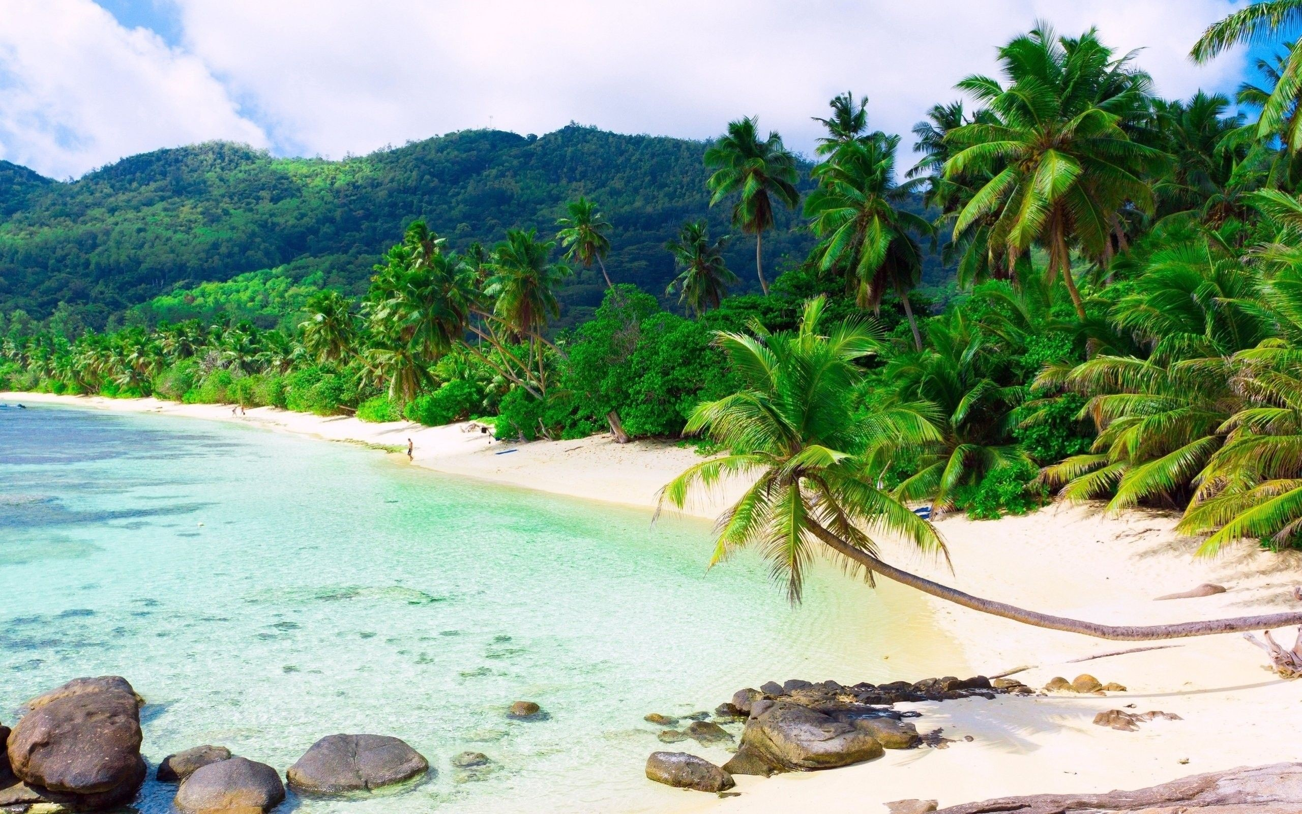 Tropical Beach Landscape Pics