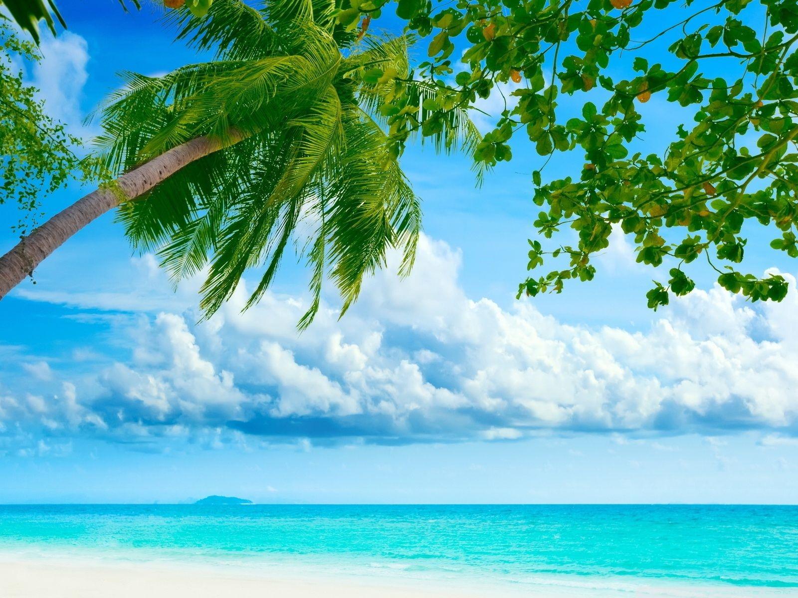Tropical Beach Landscape iphone Wallpaper