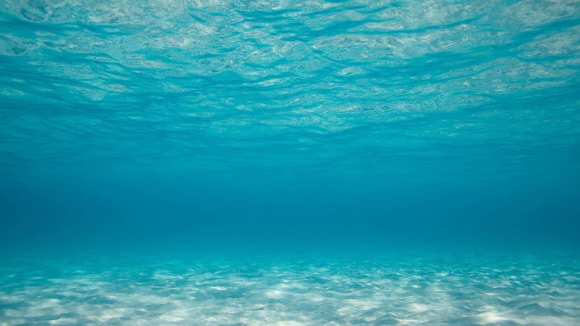Underwater UHD Wallpapers