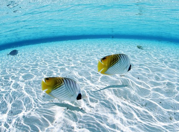 Hd Underwater Iphone Wallpapers Hd Photos Wallpapes High