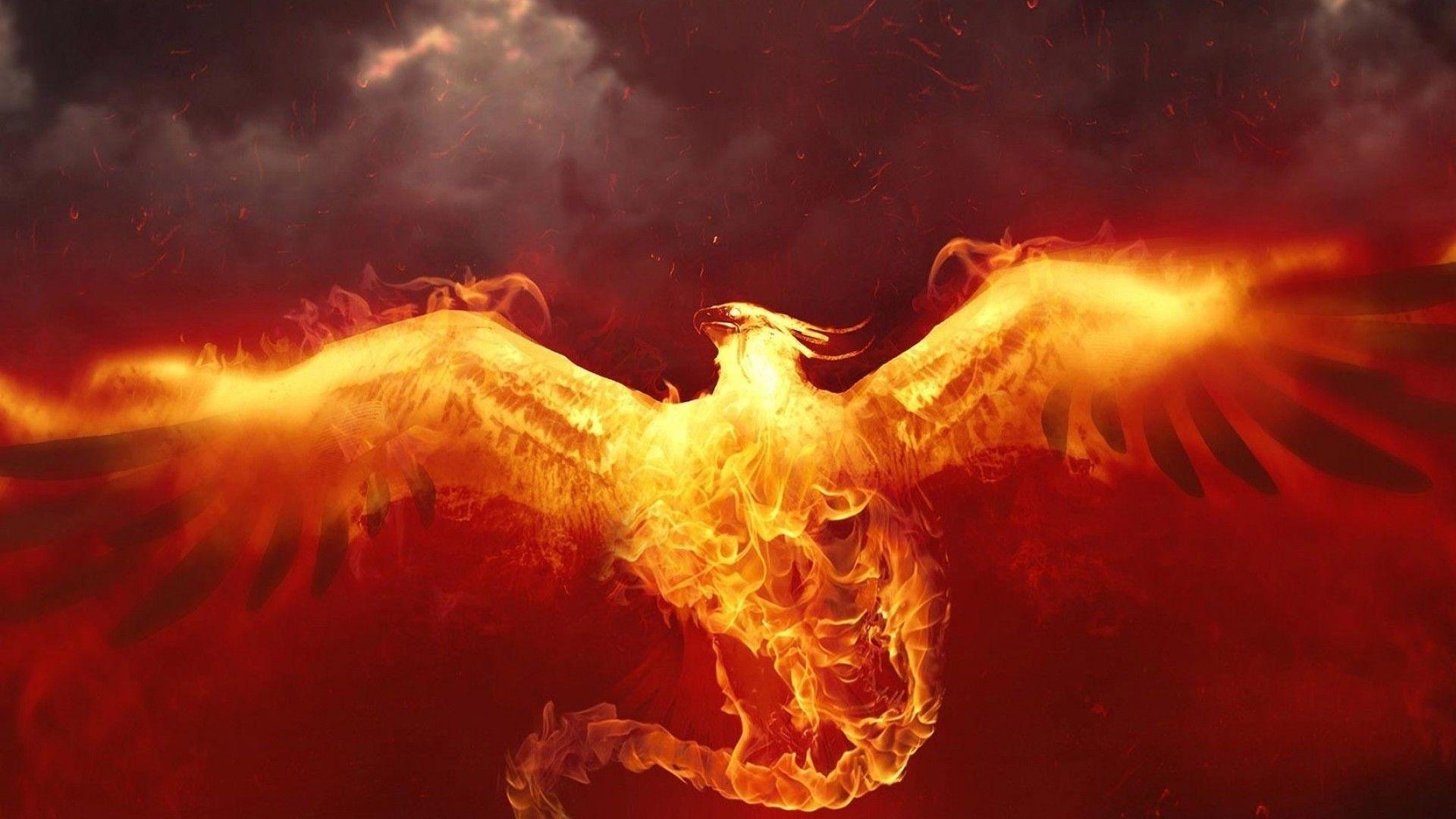 4K Phoenix Review