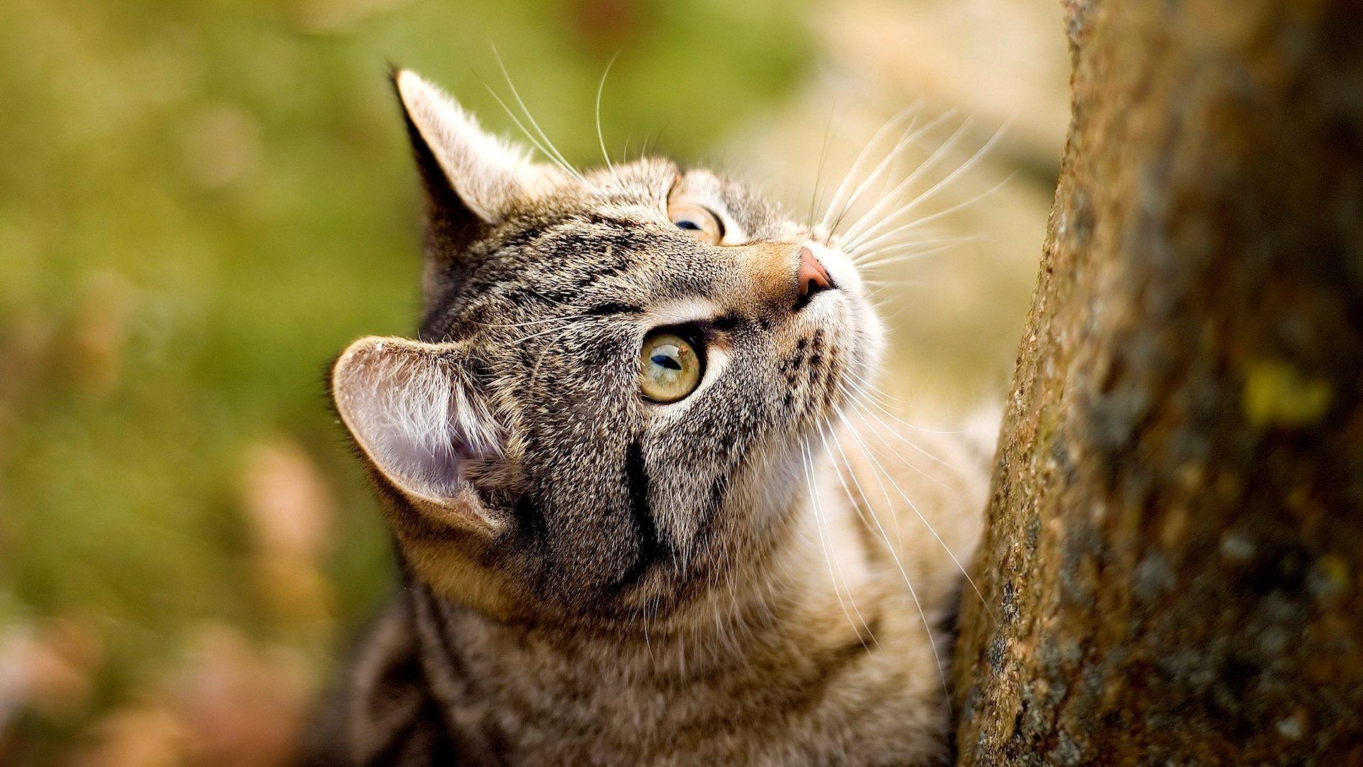 Cat Desktop images