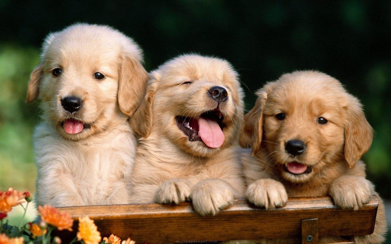 Dog Desktop Wallpapers