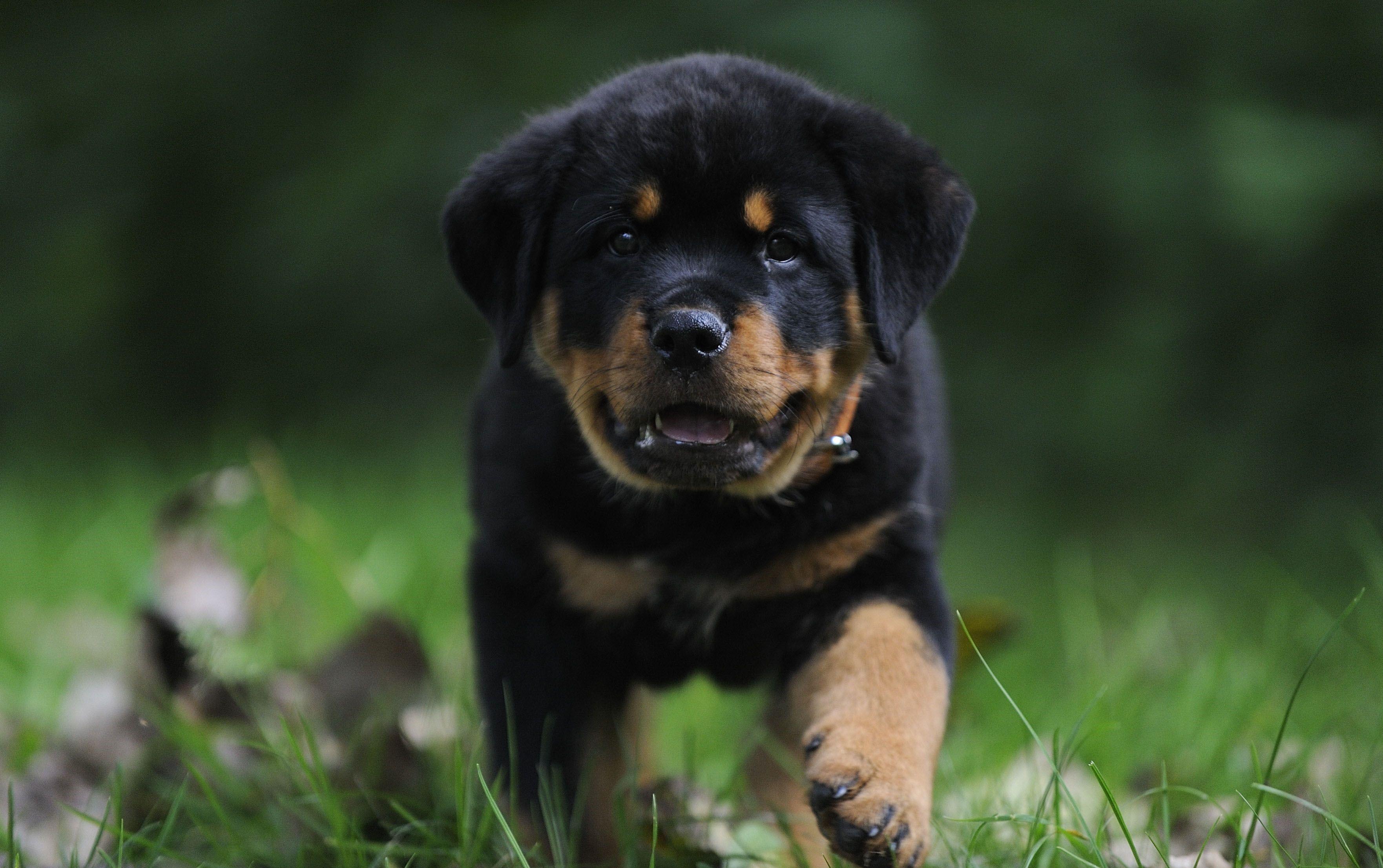 Dog Desktop images