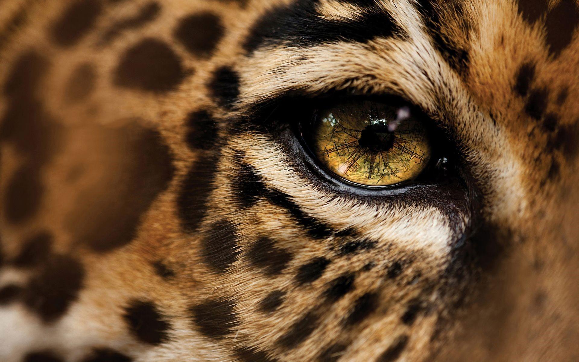 Jaguar 1080p Wallpapers