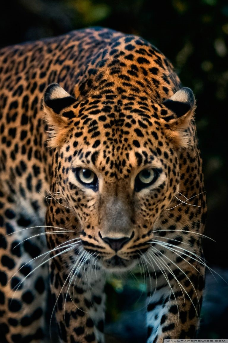 Jaguar HD Wallpapers