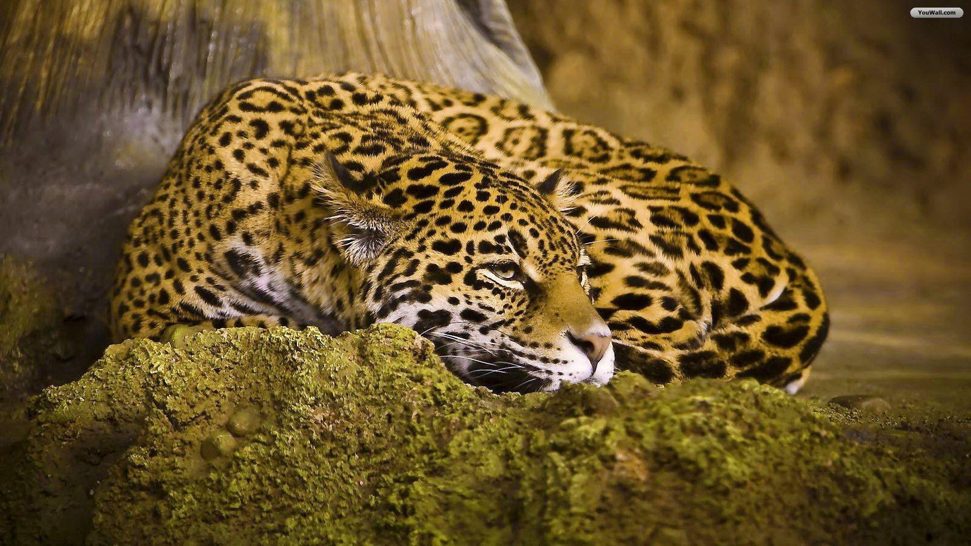 Jaguar Mobile Wallpapers
