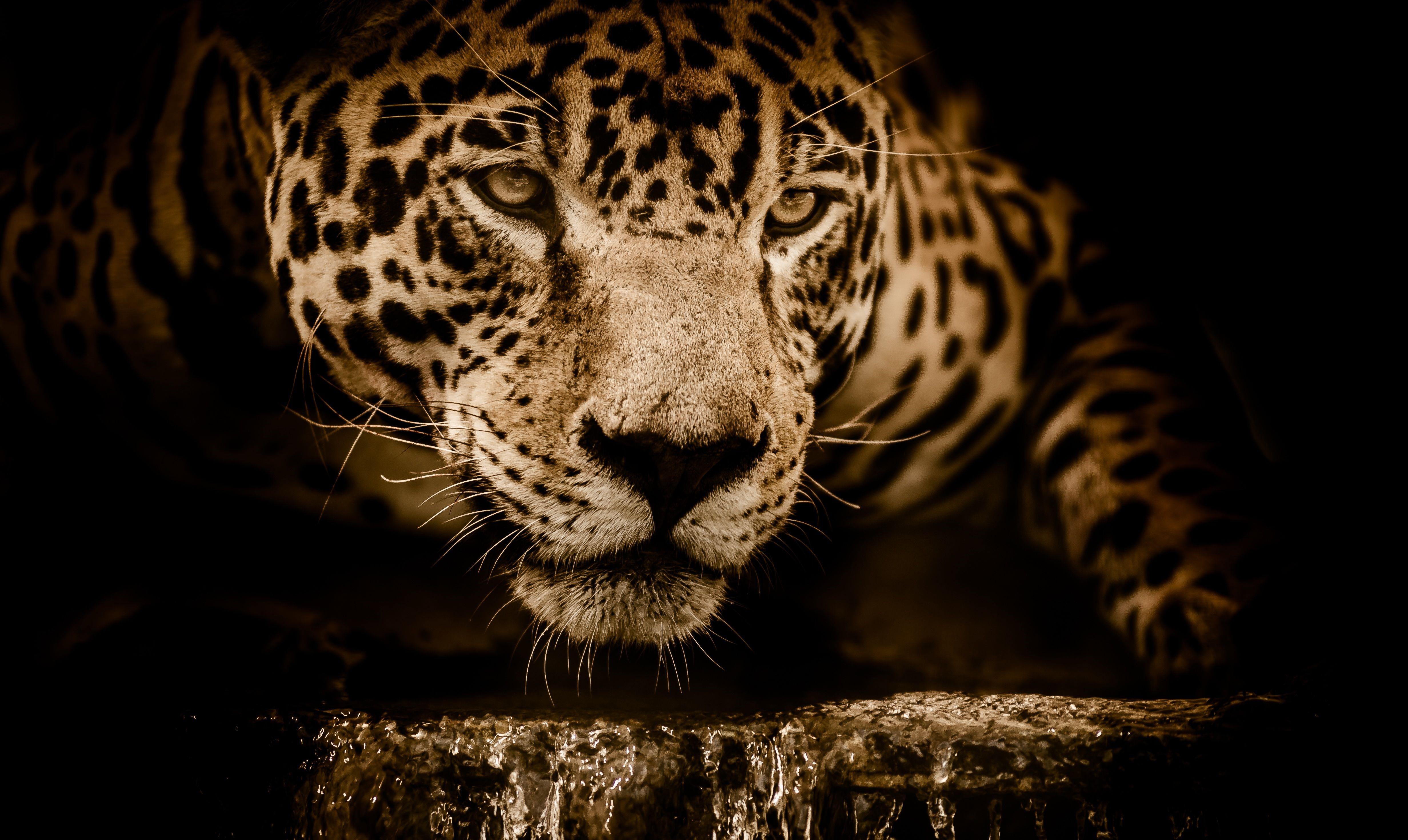 Jaguar UHD Wallpapers