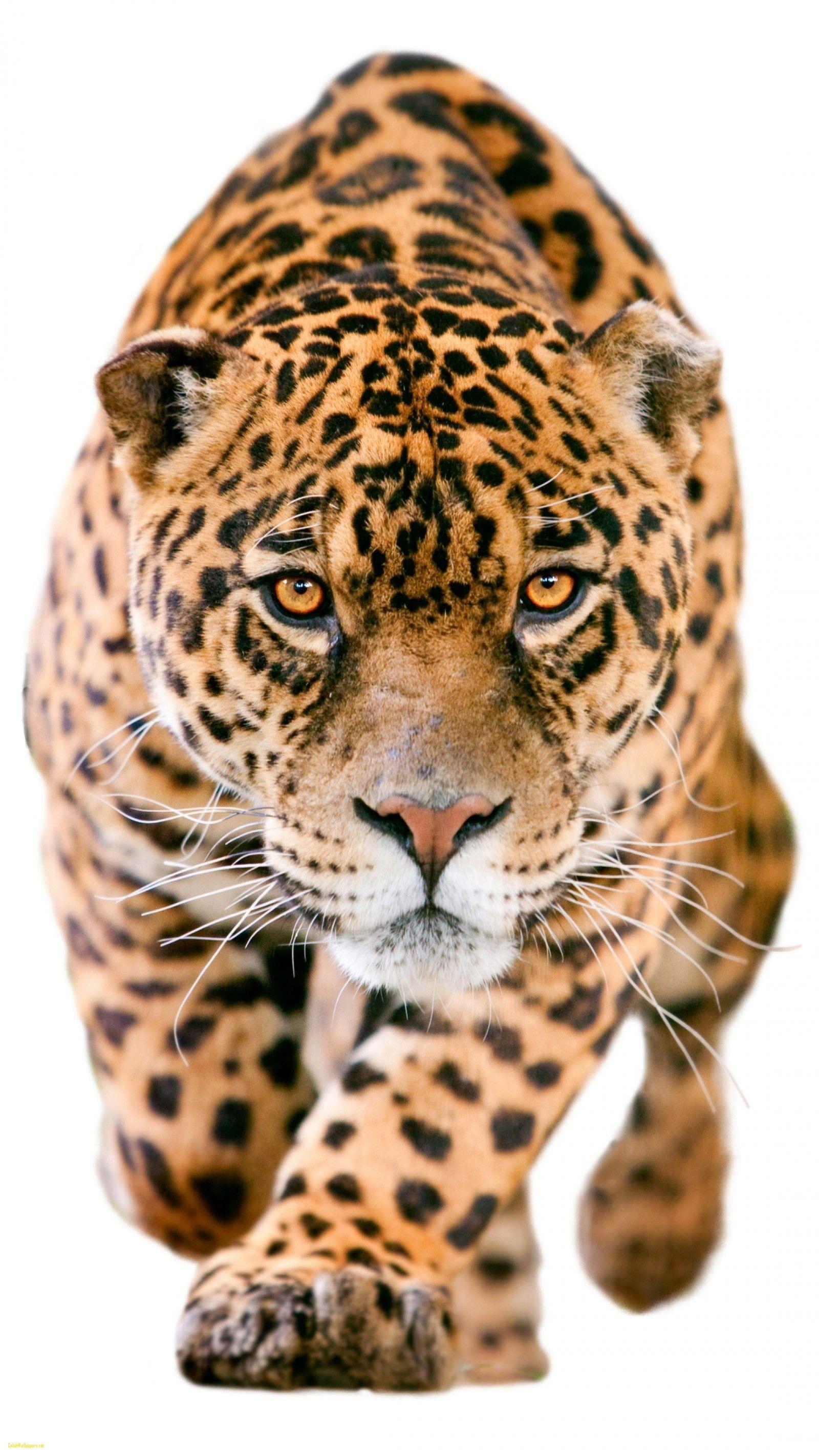 Jaguar iphone Wallpapers