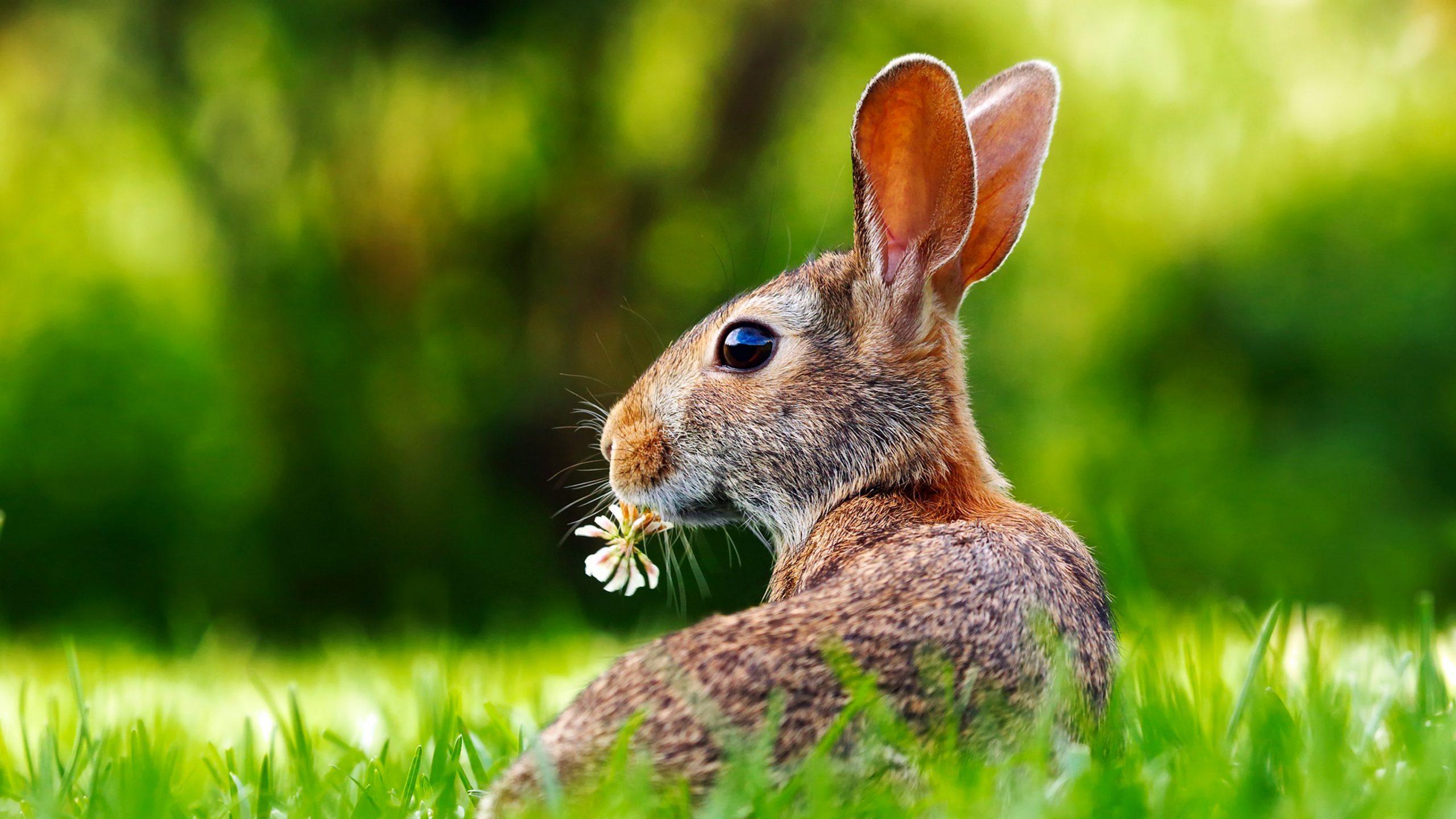 4K Rabbit Desktop Wallpaper