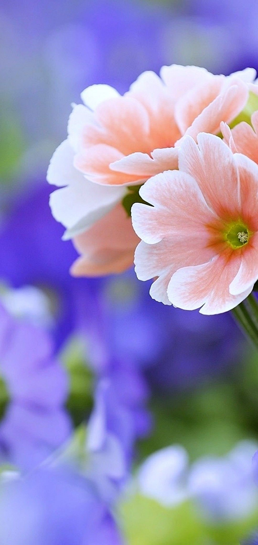 Beautiful Flower Mobile Baskground 4K