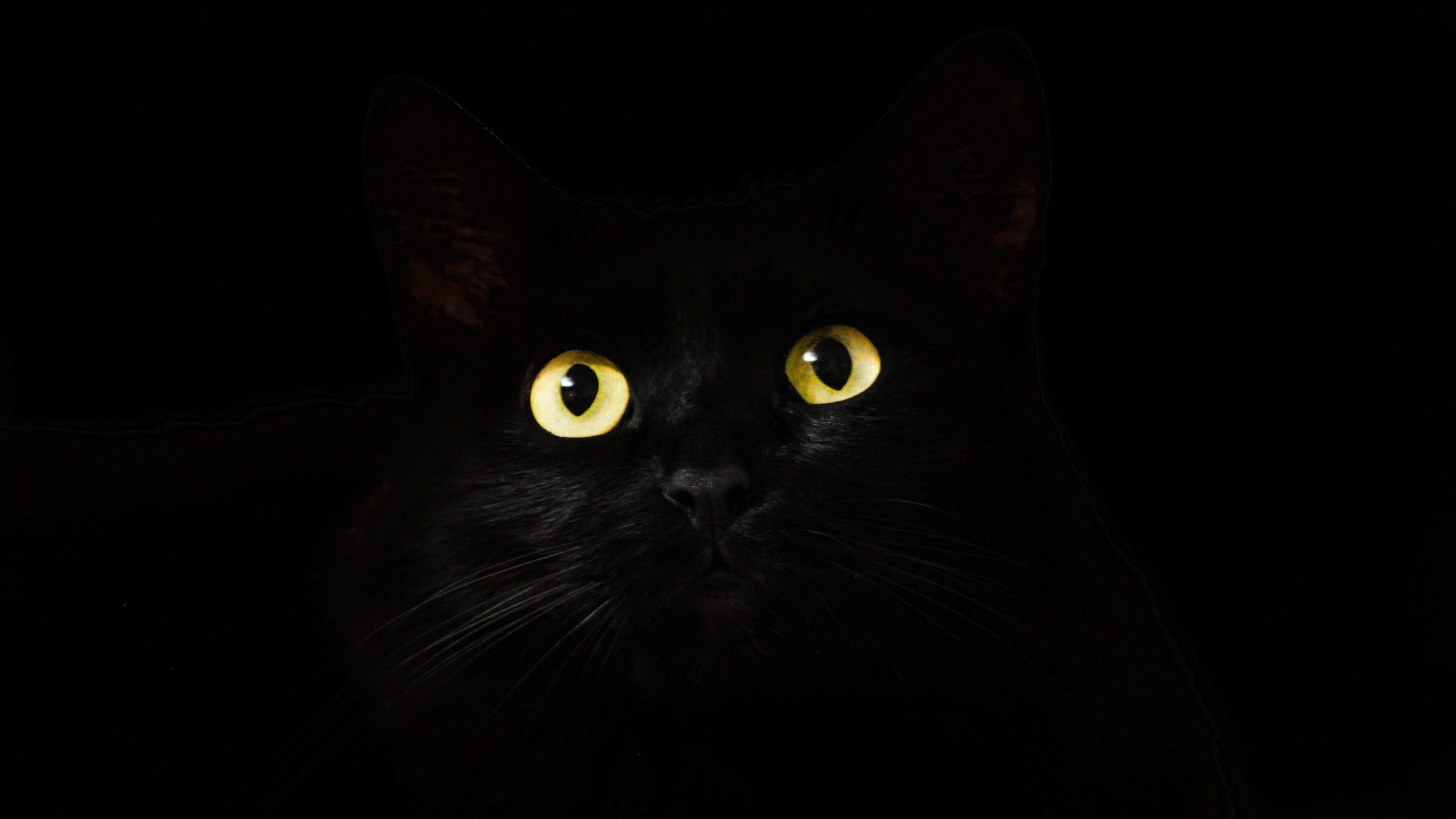 Cat Eyes Desktop 4K Wallpaper