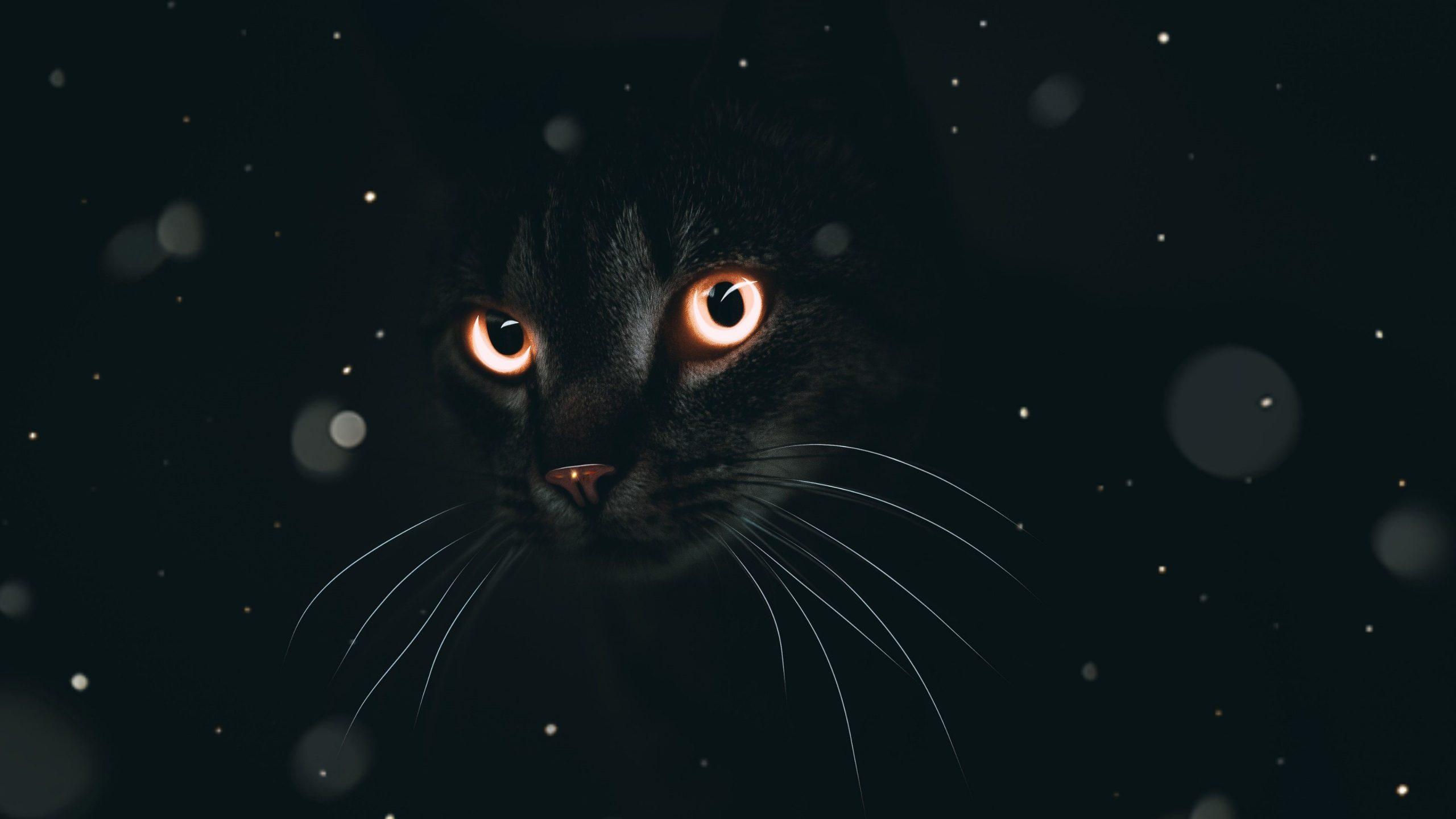 Dark Cat Hd Wallpaper Desktop