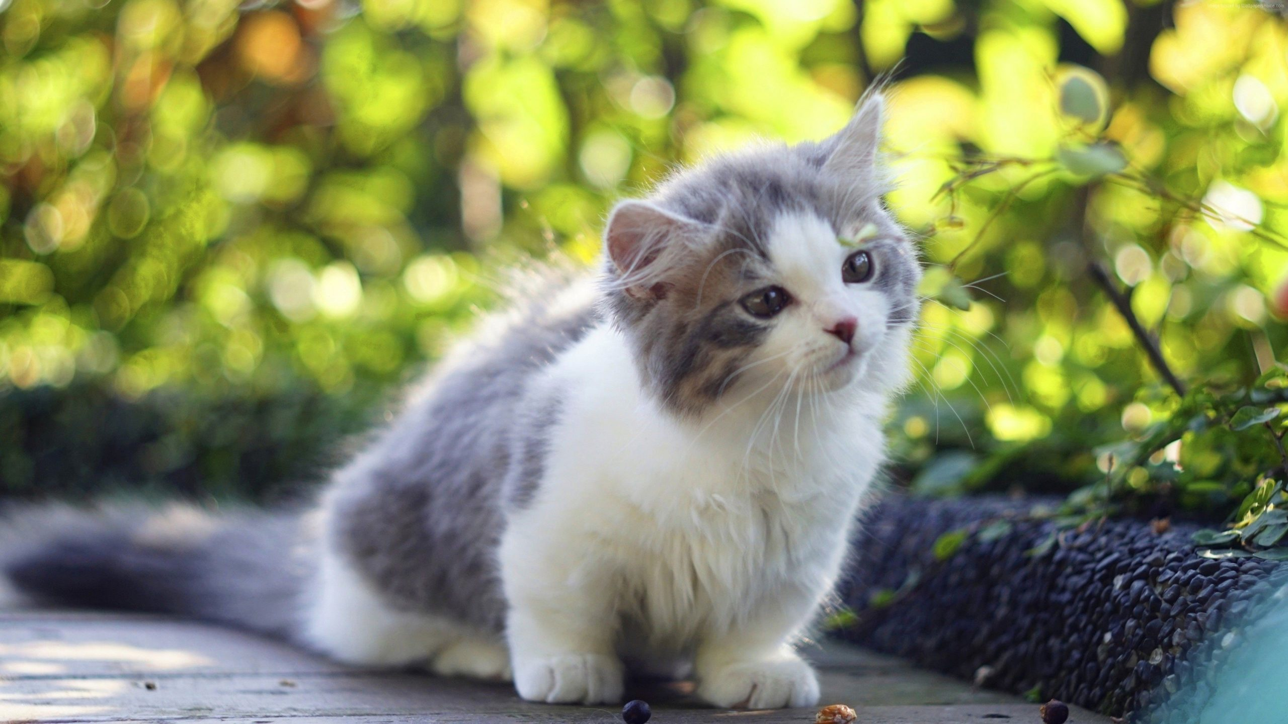 Kitten 4K Desktop Wallpaper