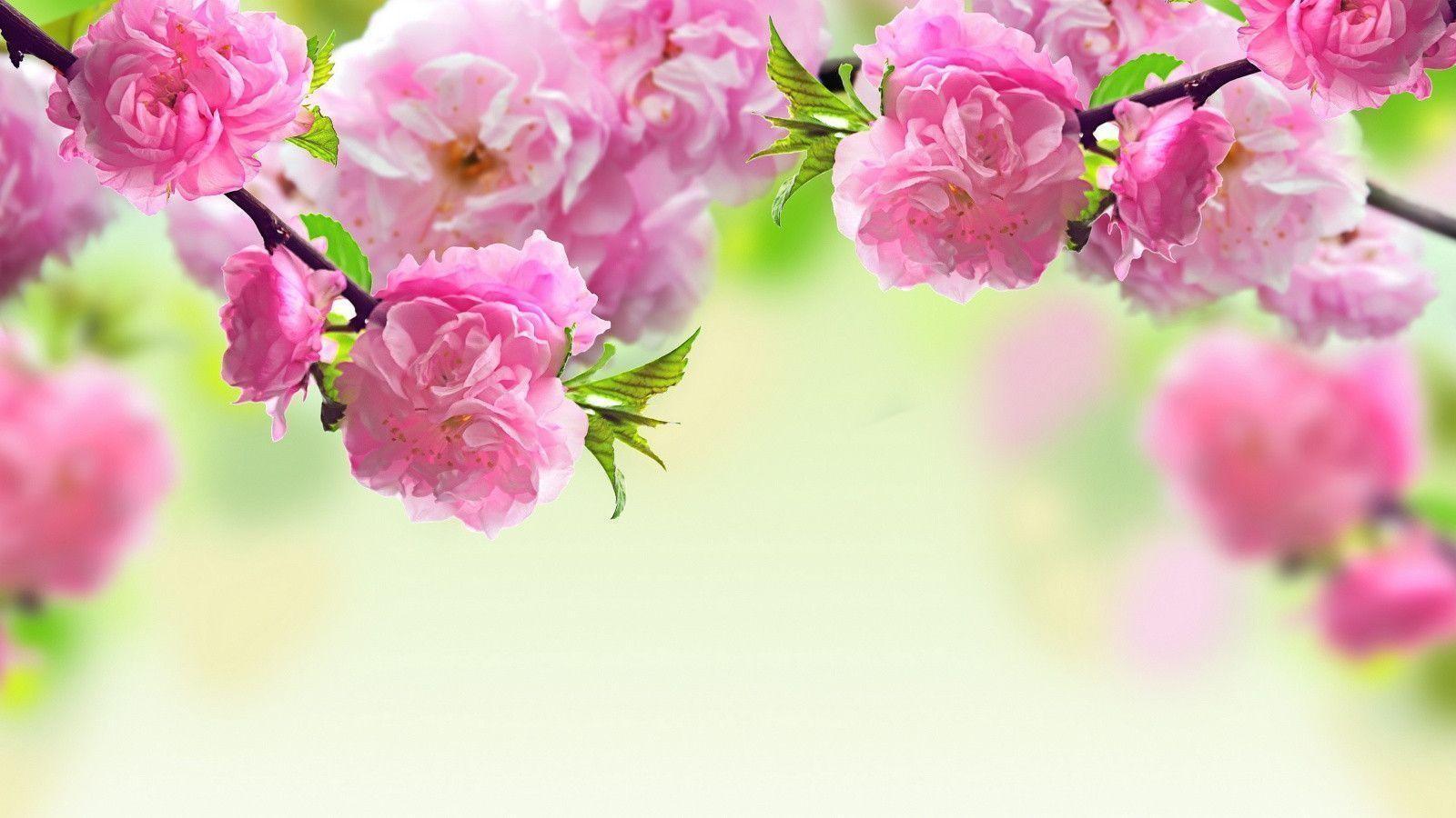Spring Flower BAckground Wallpaper