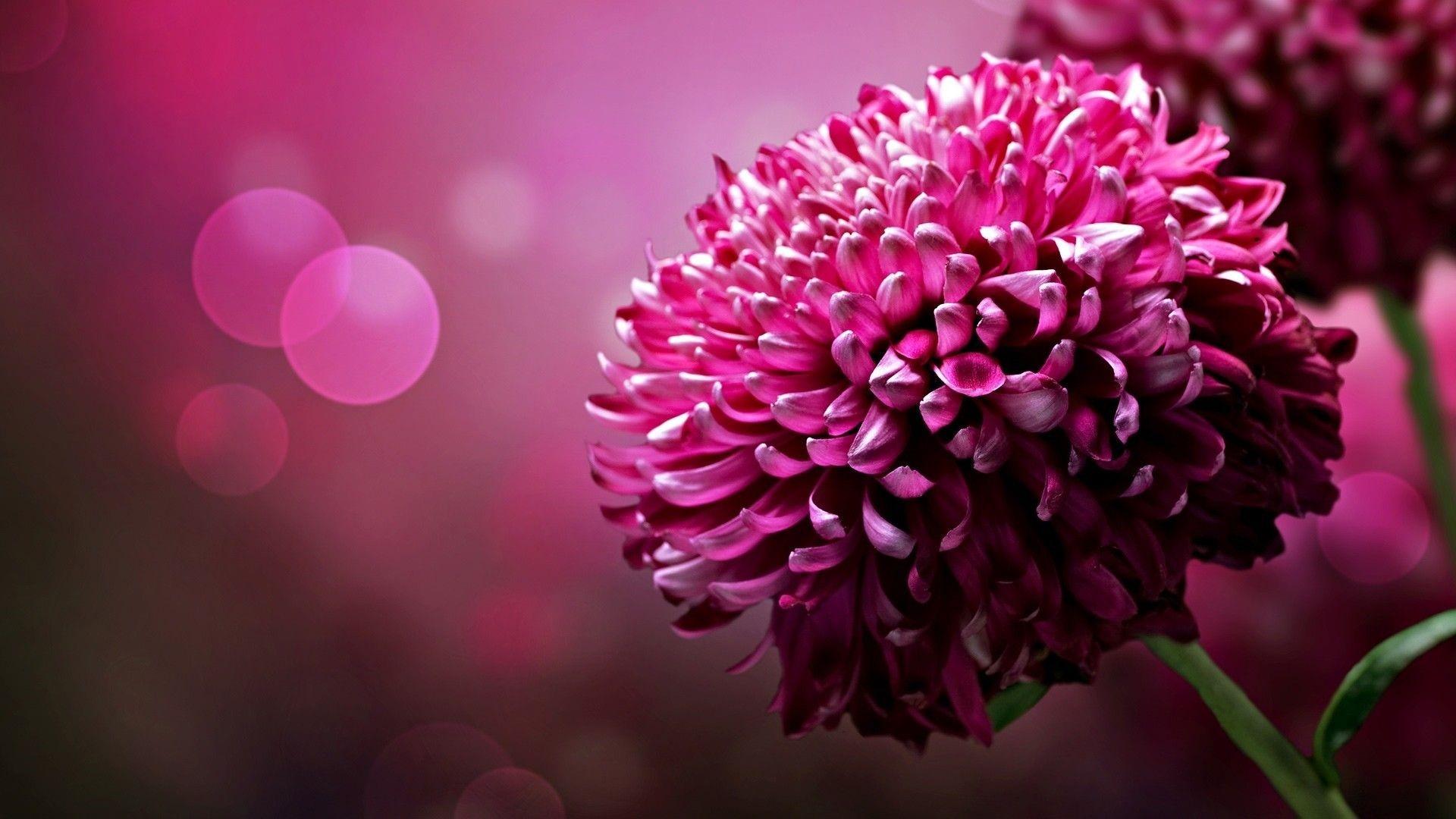 Spring HD Flowers Wallpaper