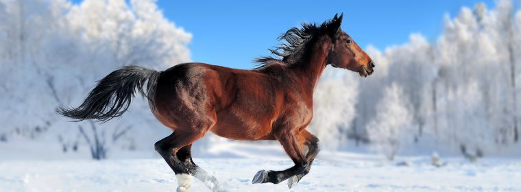 Wallpaper horse, cute animals, snow, winter, 4k, Animals